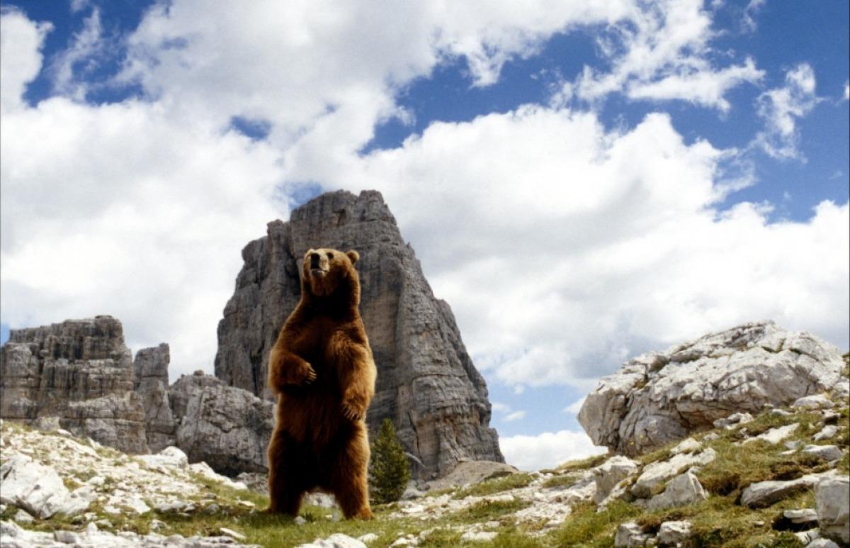 fotogramas el oso l ours 1988 de jean jacques annaud enclave de cine. Black Bedroom Furniture Sets. Home Design Ideas