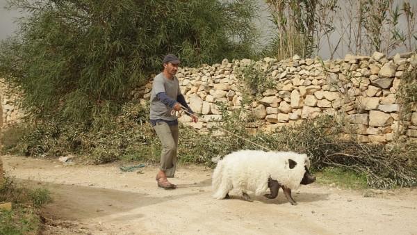 Un cerdo de Gaza (2011) de Sylvain Estibal